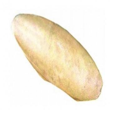 Os Sepia 15-20 cm