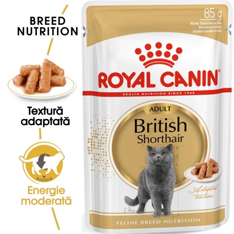 Royal Canin British Shorthair, 1 plic x 85 g - plic