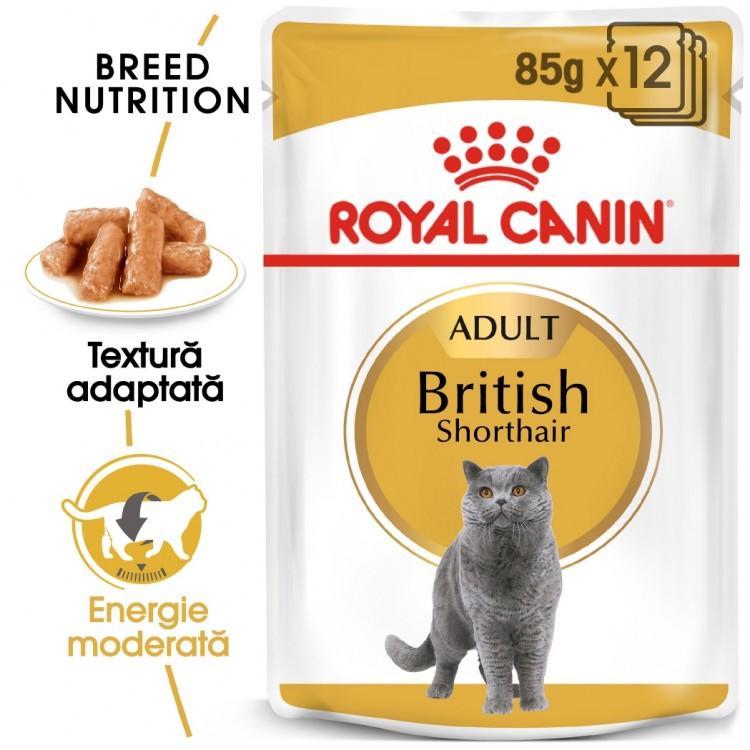 Royal Canin British Shorthair, 12 x 85 g - plic
