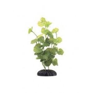 Planta Plastic Hydrocotyle M