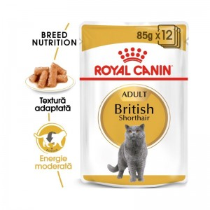 Royal Canin British Shorthair 12 plicuri X 85 g