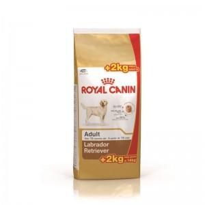 Royal Canin Labrador Retriever Adult 12 Kg + 2 Kg CADOU