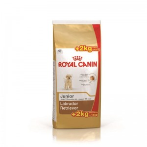 Royal Canin Labrador Retriever Junior 12 Kg + 2 Kg CADOU