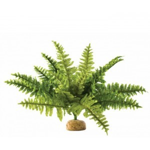 EXO TERRA PLANTA BOSTON FERN