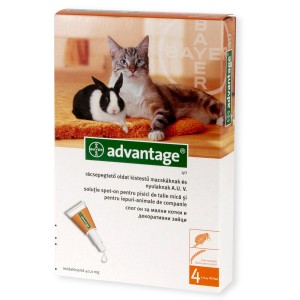 Advantage 40 Pisica | Pipeta antiparazitara Advantage 40 1 cut - 4 pipete