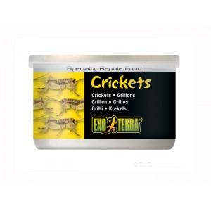 Hrana reptile Hagen Meniu Exo Terra Cricket Greiere XL 34 g