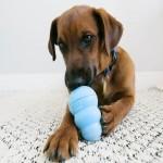Jucarie Kong M Puppy, 9 cm