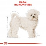 Royal Canin Bichon Frise Adult - rasa