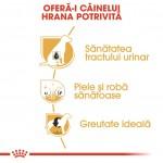 Royal Canin Bichon Frise Adult - beneficii