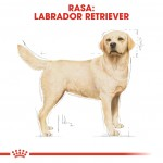 Royal Canin Labrador Adult - rasa