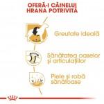Royal Canin Labrador Adult - beneficii