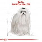 Royal Canin Maltese Adult - rasa