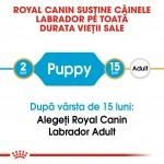 Royal Canin Labrador Puppy - varsta