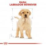 Royal Canin Labrador Puppy - rasa