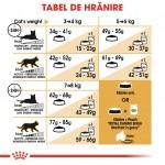 Royal Canin British Shorthair Adult - hranire