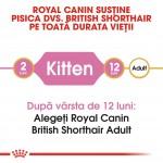 Royal Canin British Shorthair Kitten - varsta