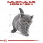 Royal Canin British Shorthair Kitten - rasa