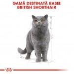 Royal Canin British Shorthair, 1 plic x 85 g - rasa
