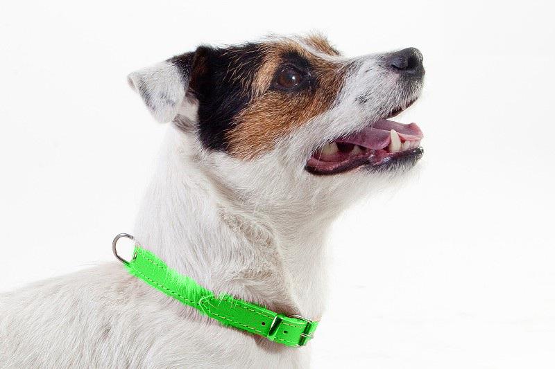 Zgarda piele caine Dingo-Verde-1,8 cm-45 cm imagine
