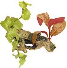 Decor Radacina Cu Plante Small imagine