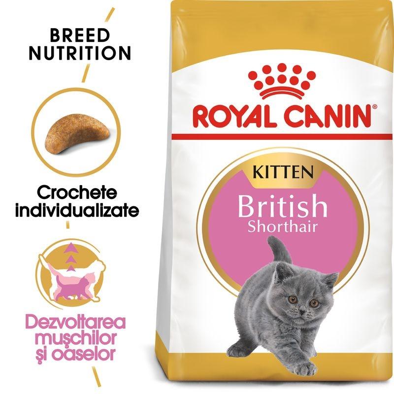 Royal Canin British Shorthair Kitten imagine