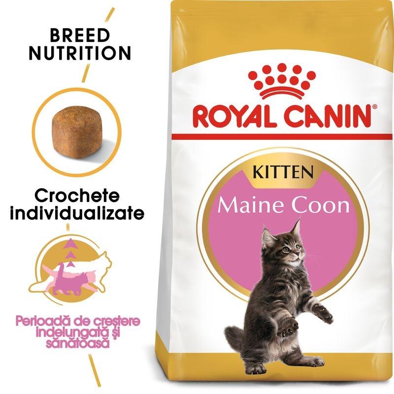 Royal Canin Maine Coon Kitten imagine