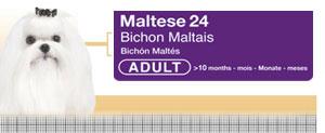 Royal Canin Bichon Maltese Adult - Hrana Uscata Caini Adulti din Rasa Bichon Maltez