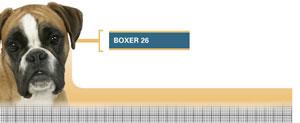 Royal Canin Boxer Junior - Hrana Uscata Caini Juniori din Rasa Boxer