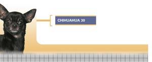Royal Canin Chihuahua Junior - Hrana Uscata Pentru caini Juniori din Rasa Chihuahua