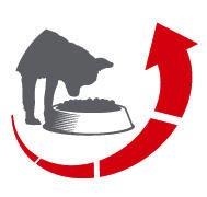 Royal Canin Chihuahua Junior - Palatabilitate superioara  Stimuleaza apetitul celor mai capriciosi Chihuahua, datorita formulei exclusive, ce contine arome naturale atent selectionate si formei unice a crochetei, adaptata maxilarului.