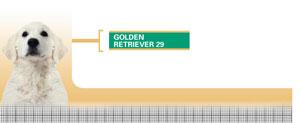 Royal Canin Golden Retriever Junior - Hrana Uscata Caini Juniori din Rasa Golden Retriever