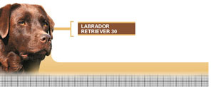 Royal Canin Labrador Retriever Adult - Hrana Uscata Caini Adulti Rasa Labrador Retriever