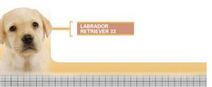 Royal Canin Labrador Retriever Junior - Hrana Uscata Caini Juniori din Rasa Labrador Retriever
