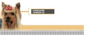 Royal Canin Yorkshire Terrier Adult - Hrana Uscata Caini Adulti din Rasa Yorkshire Terrier