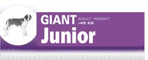 Royal Canin Giant Junior - Hrana Uscata Catei de Talie Giant