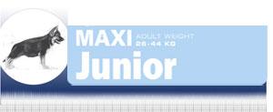 Royal Canin Maxi Junior - Hrana Uscata Superpremium Catei de Talie Maxi